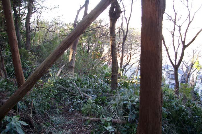 六国見山森林公園の今年最後の臨時手入れ終了:12・24_c0014967_11202116.jpg