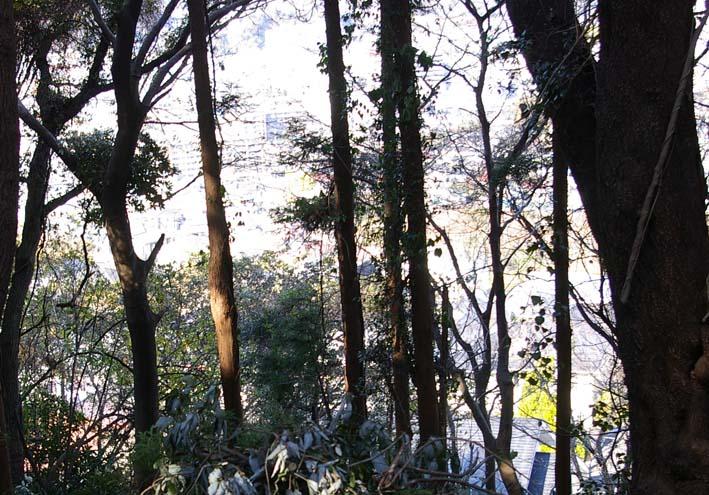 六国見山森林公園の今年最後の臨時手入れ終了:12・24_c0014967_22525591.jpg