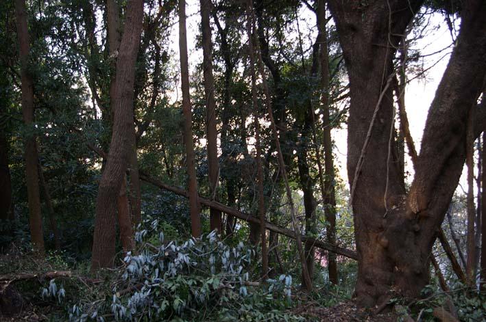 六国見山森林公園の今年最後の臨時手入れ終了:12・24_c0014967_22534633.jpg