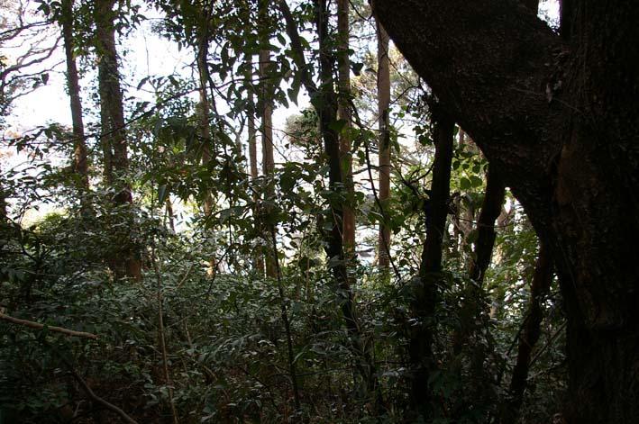 六国見山森林公園の今年最後の臨時手入れ終了:12・24_c0014967_2254571.jpg