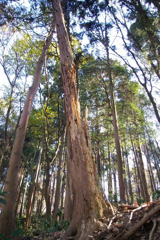 六国見山森林公園の今年最後の臨時手入れ終了:12・24_c0014967_2259867.jpg
