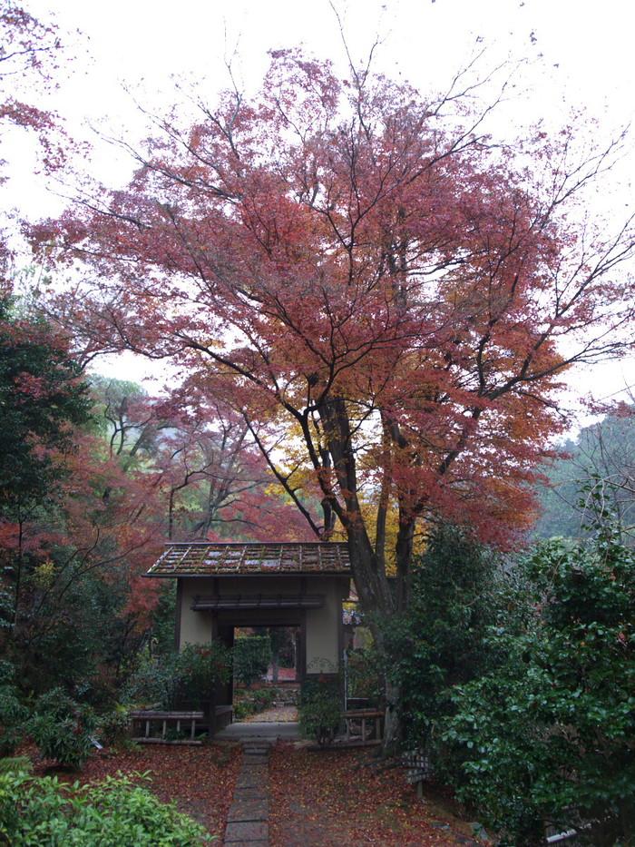 紅葉 2011 嵯峨野 直指庵_f0021869_1939853.jpg