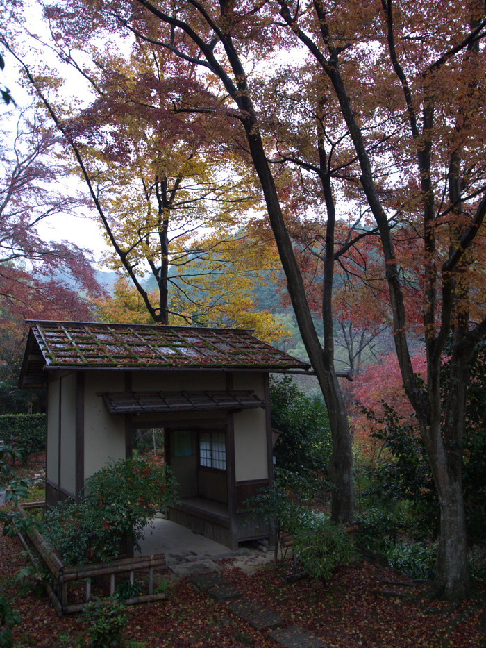 紅葉 2011 嵯峨野 直指庵_f0021869_19414567.jpg