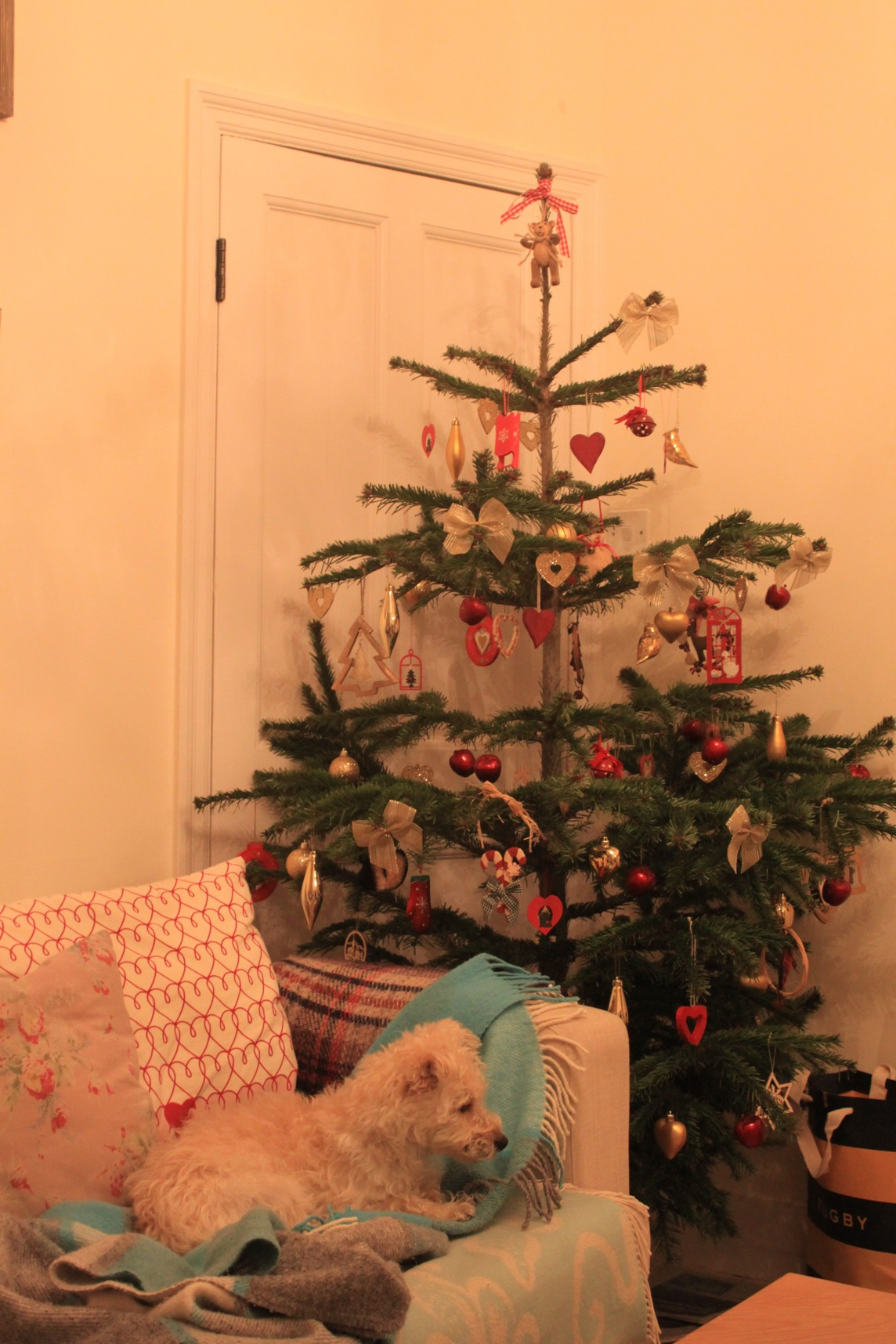 Christmas 2011_a0137487_29303.jpg