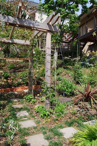 2011年の庭…_c0124100_10501045.jpg