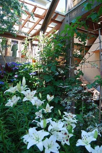 2011年の庭…_c0124100_1050372.jpg