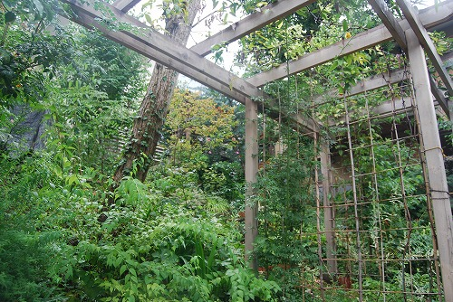 2011年の庭…_c0124100_10505321.jpg