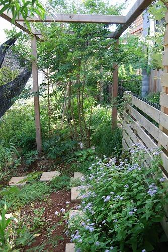 2011年の庭…_c0124100_1051882.jpg