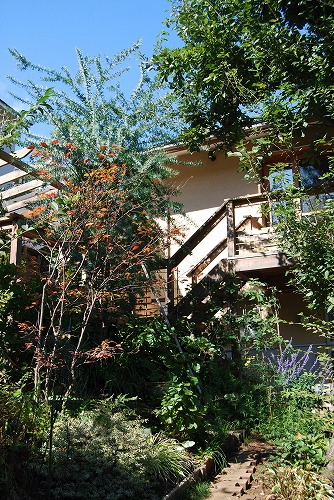 2011年の庭…_c0124100_1052163.jpg