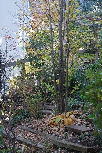 2011年の庭…_c0124100_10522459.jpg