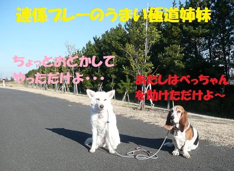f0121712_18512750.jpg