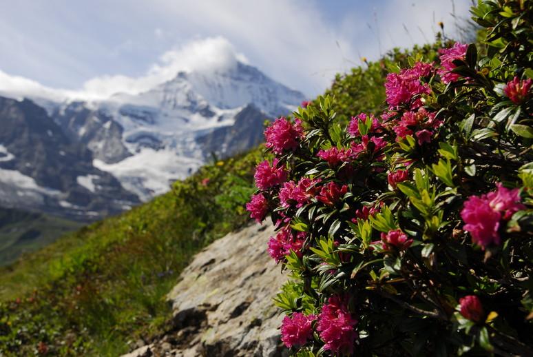 2011年の思い出、憧れのスイスアルプスを訪ねて_c0219616_12444088.jpg