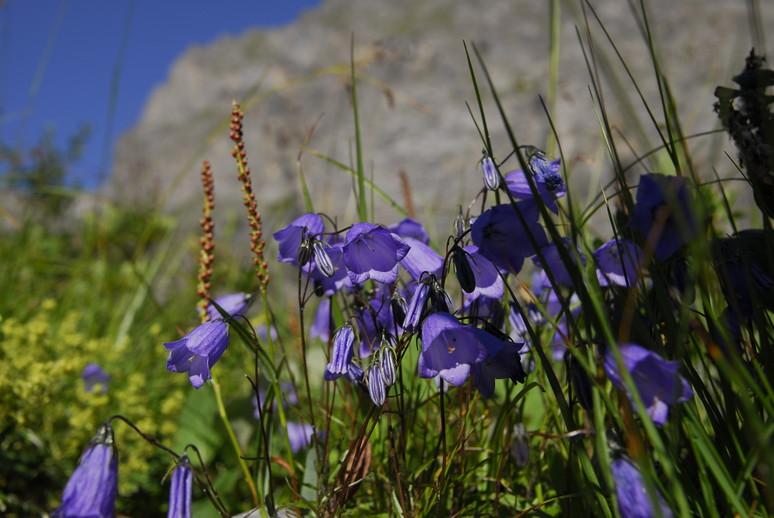 2011年の思い出、憧れのスイスアルプスを訪ねて_c0219616_12515246.jpg