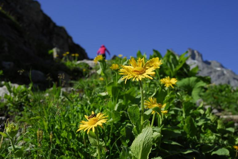 2011年の思い出、憧れのスイスアルプスを訪ねて_c0219616_12522954.jpg