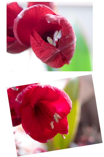 f0163616_20352937.jpg