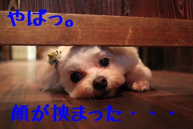 b0130018_13484144.jpg