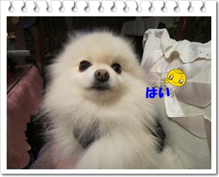b0167519_15124869.jpg