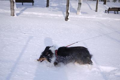 雪大好き_d0233474_12412547.jpg