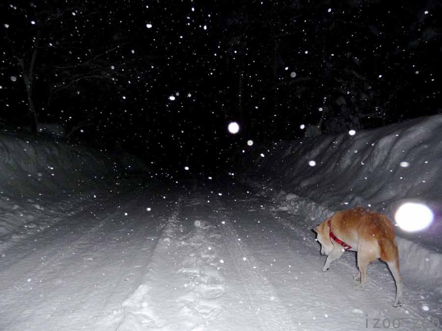 雪壁、出来てます_c0223095_1731285.jpg