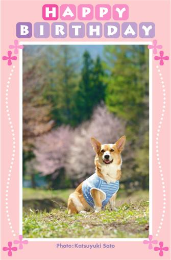 ネスタちゃん、お誕生日おめでとう♪_d0102523_0184487.jpg