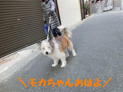 お日様ぽかぽか、お昼寝日和_e0222588_16504568.jpg