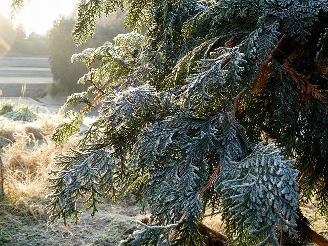 凍ってる朝_c0165589_928633.jpg