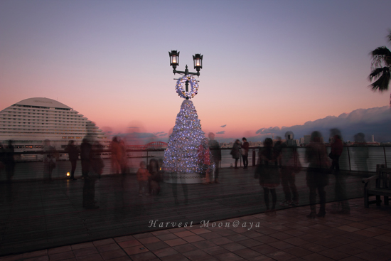 2011~December_b0208495_2181731.jpg