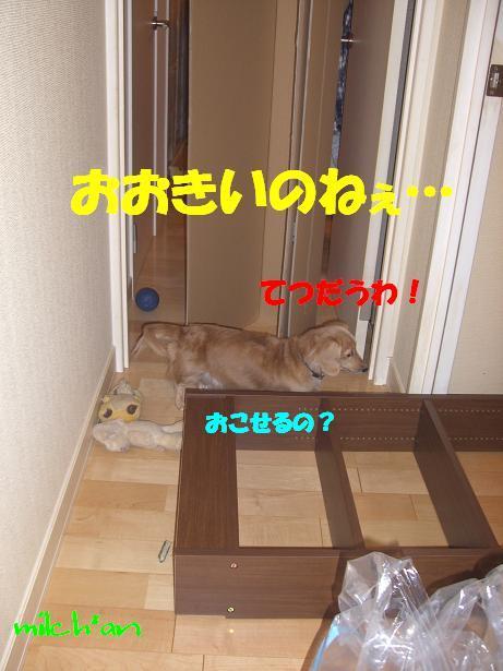 b0115642_2101888.jpg