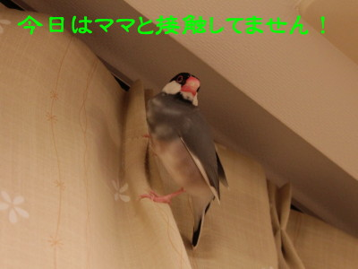 b0158061_22161841.jpg