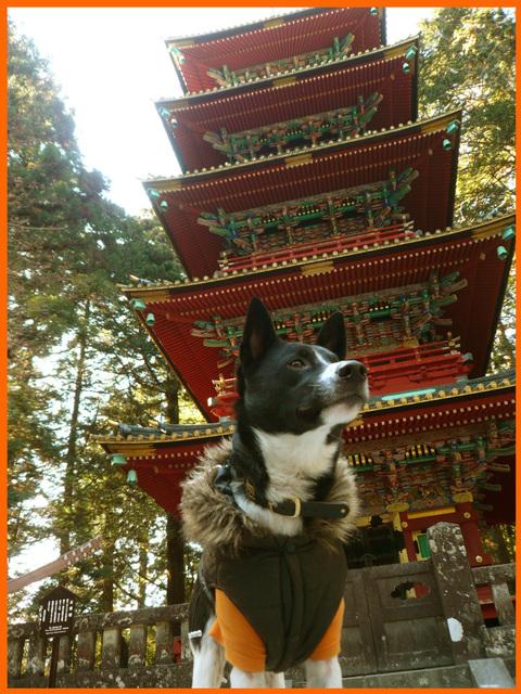 日光東照宮へお参り。一年の感謝と来る年のお願い。_e0236072_2341166.jpg