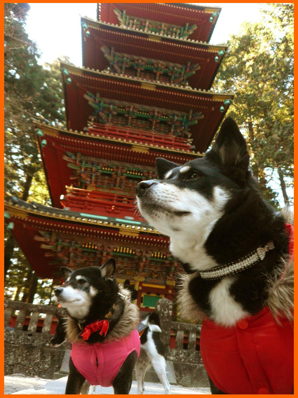 日光東照宮へお参り。一年の感謝と来る年のお願い。_e0236072_2354381.jpg