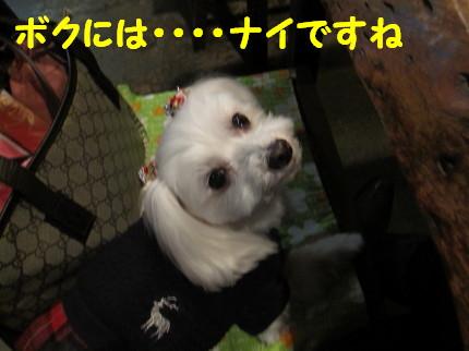 b0193480_13254861.jpg