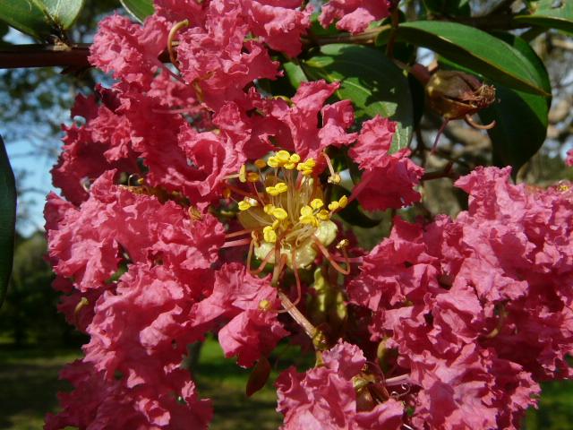 9月27日神代植物公園_e0145782_16492678.jpg