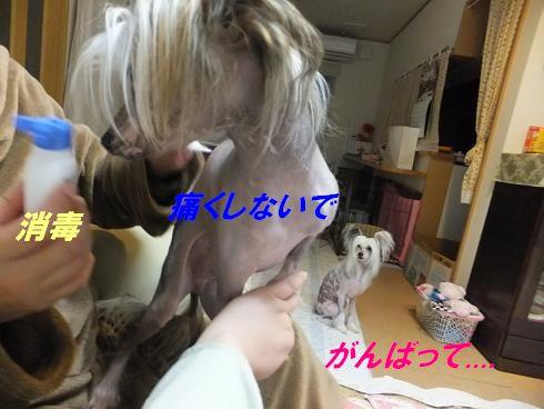 f0179203_8324772.jpg