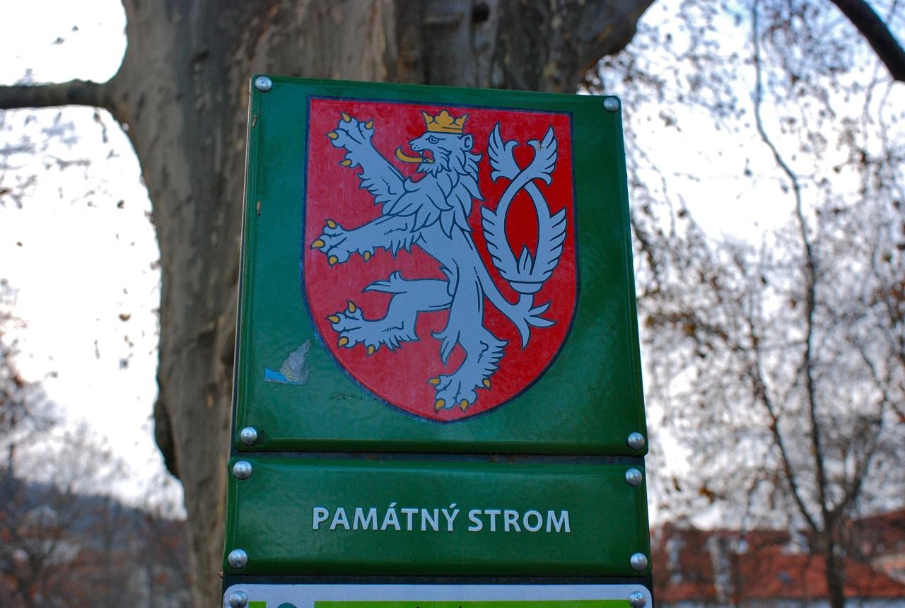 チェコ・文字の上に付くアクセント_e0175918_2065276.jpg
