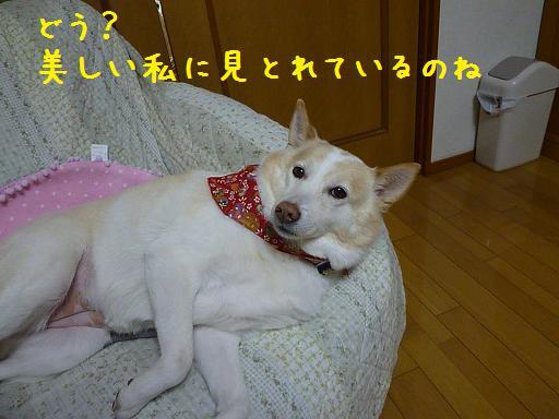 b0138430_2093434.jpg