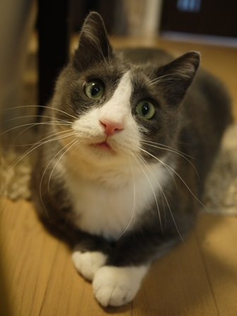 猫のお友だち カン太くん編。_a0143140_21373735.jpg