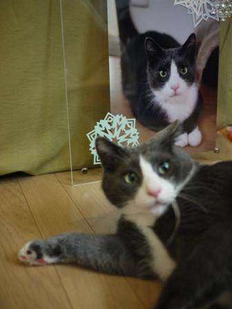猫のお友だち カン太くん編。_a0143140_21384445.jpg