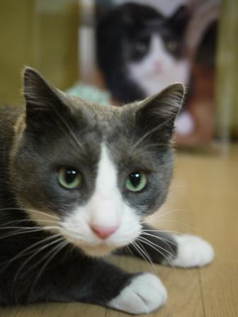 猫のお友だち カン太くん編。_a0143140_21394383.jpg