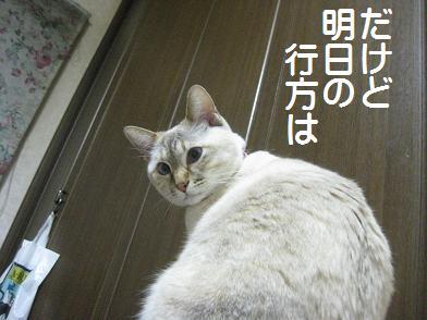 b0151748_14352934.jpg