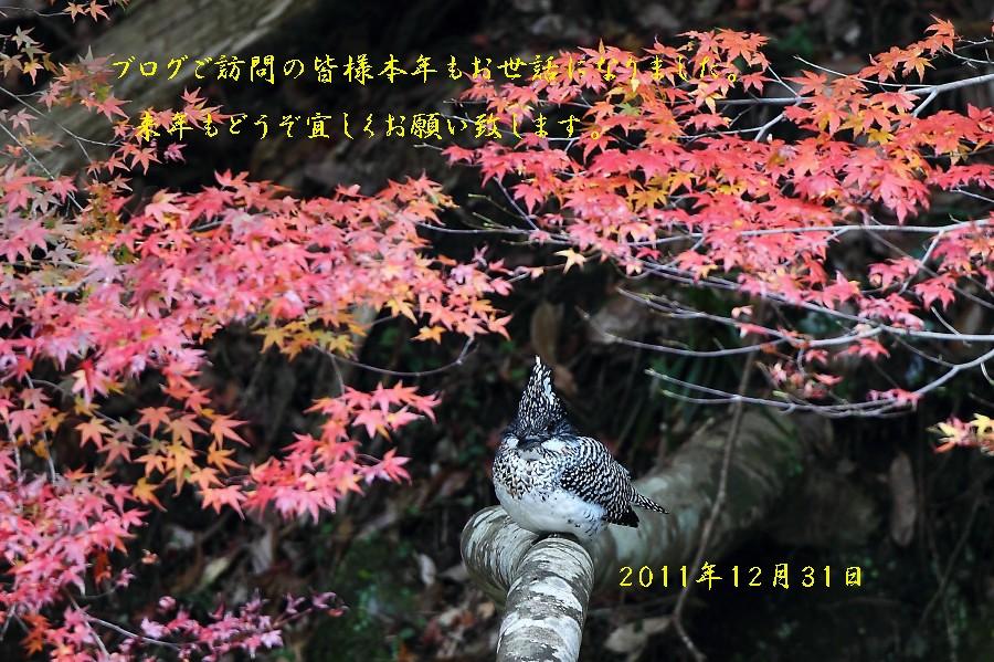 f0132959_22215728.jpg