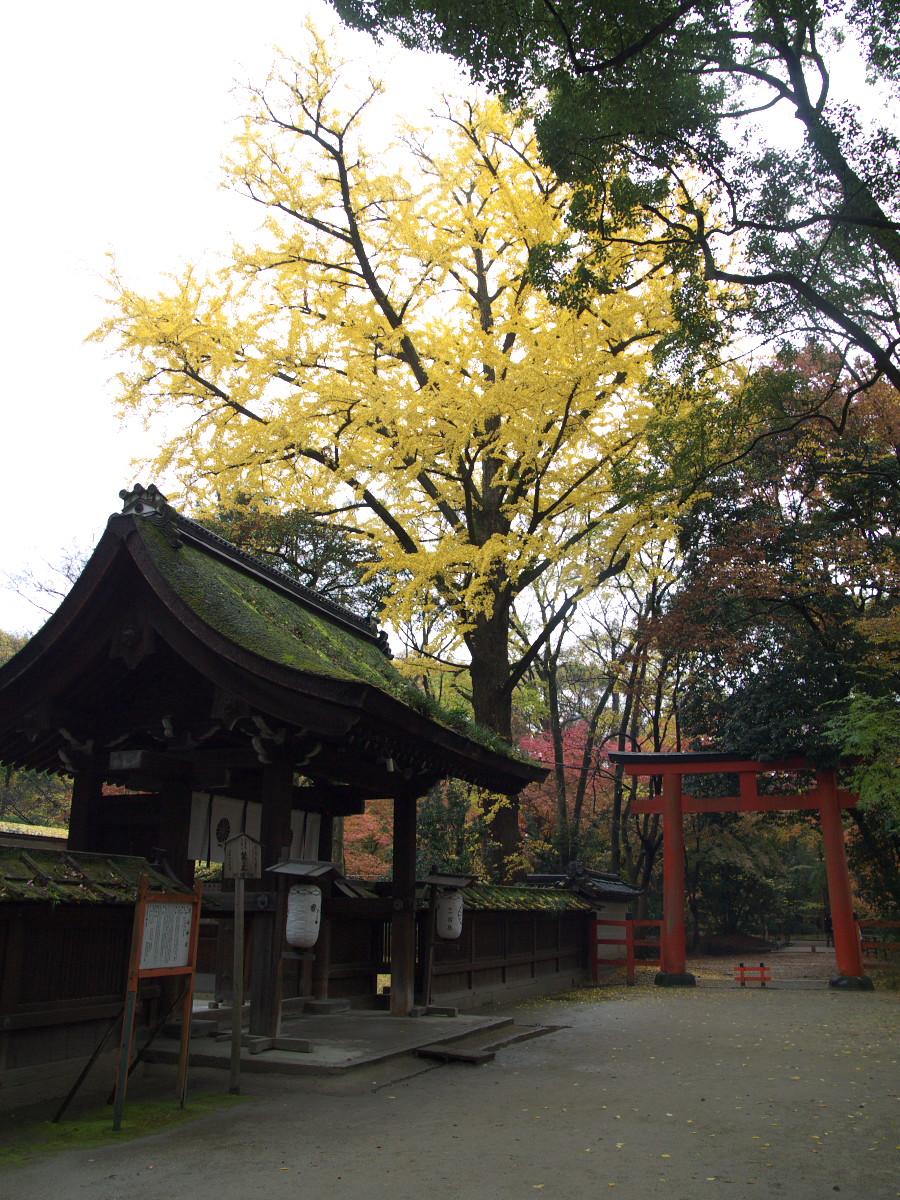 紅葉 2011  糺の森_f0021869_1255845.jpg