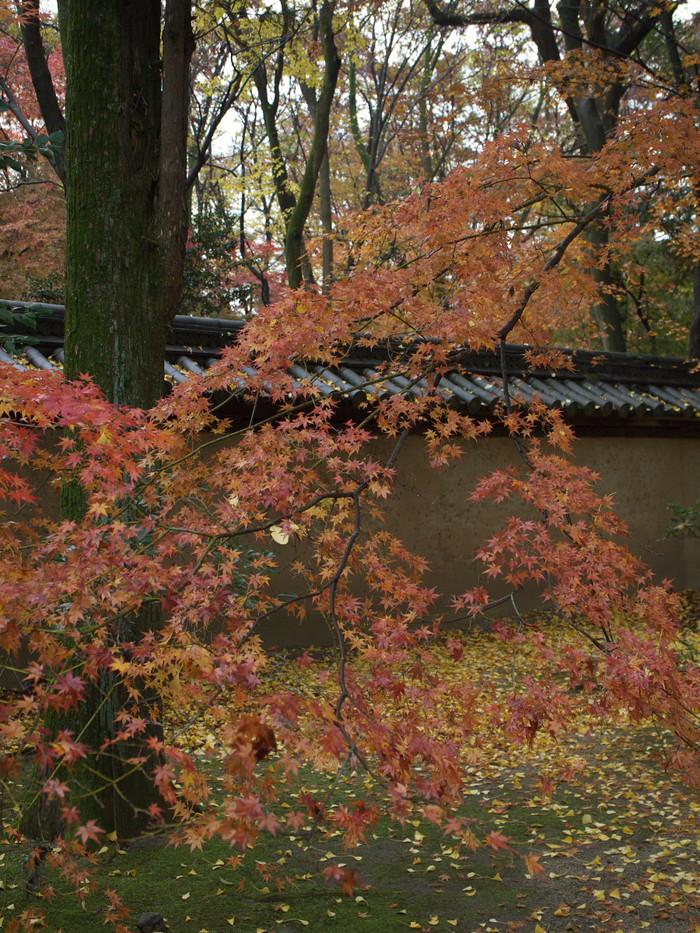 紅葉 2011  糺の森_f0021869_1281242.jpg
