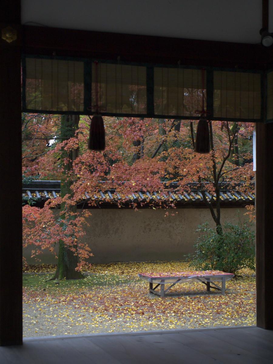 紅葉 2011  糺の森_f0021869_1292121.jpg