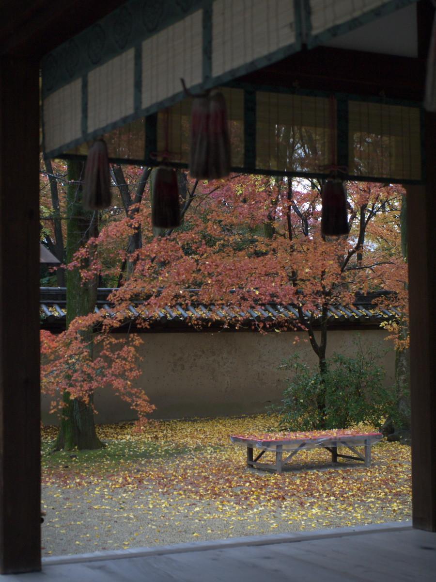 紅葉 2011  糺の森_f0021869_1295052.jpg