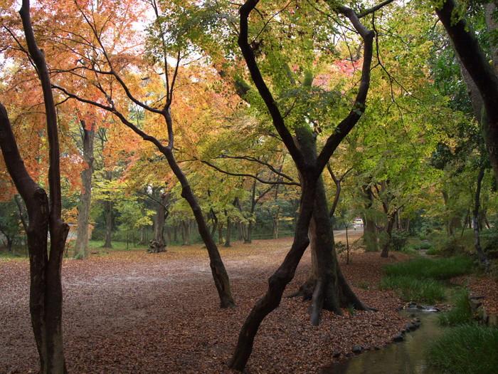 紅葉 2011 糺の森 _f0021869_1857776.jpg