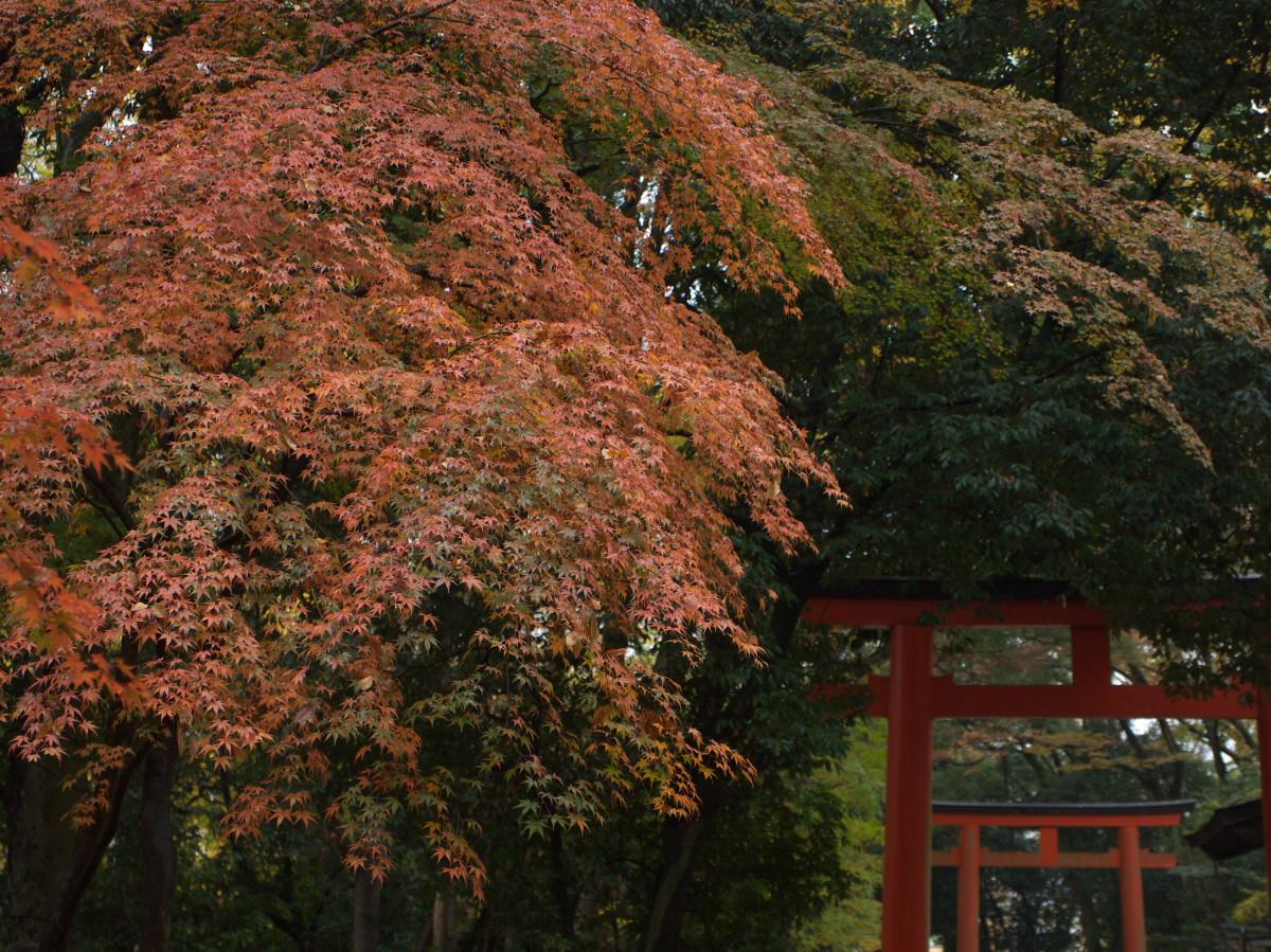 紅葉 2011 糺の森 _f0021869_1922113.jpg