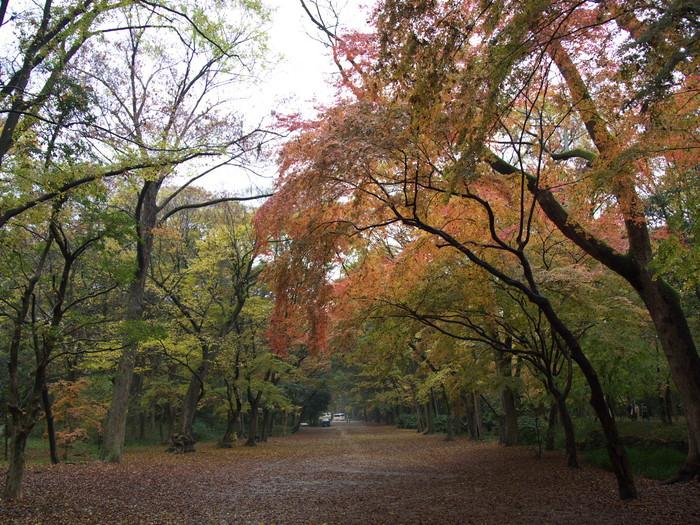 紅葉 2011 糺の森 _f0021869_1942023.jpg