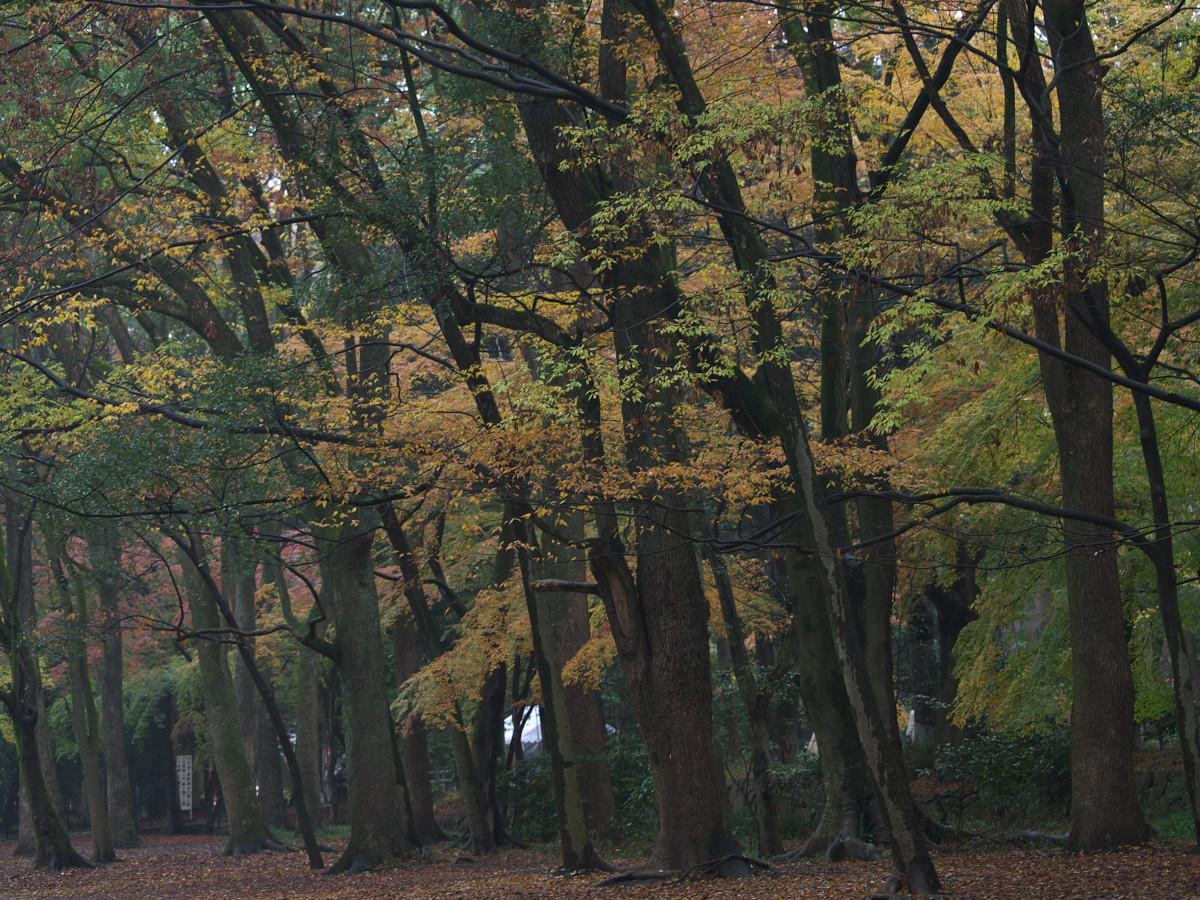 紅葉 2011 糺の森 _f0021869_1971436.jpg