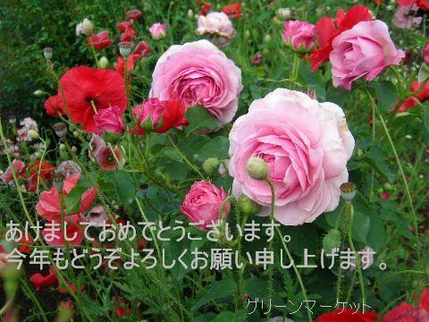 e0255117_11413517.jpg